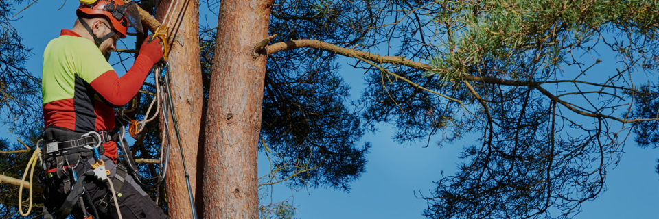 As licensed and trained arborists we help to maintain the health of trees, shrubs and plants.
